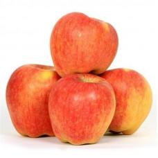 Apple / Seb Kashmiri